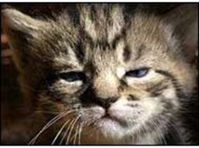 Kedi korkusu: Ailurofobi
